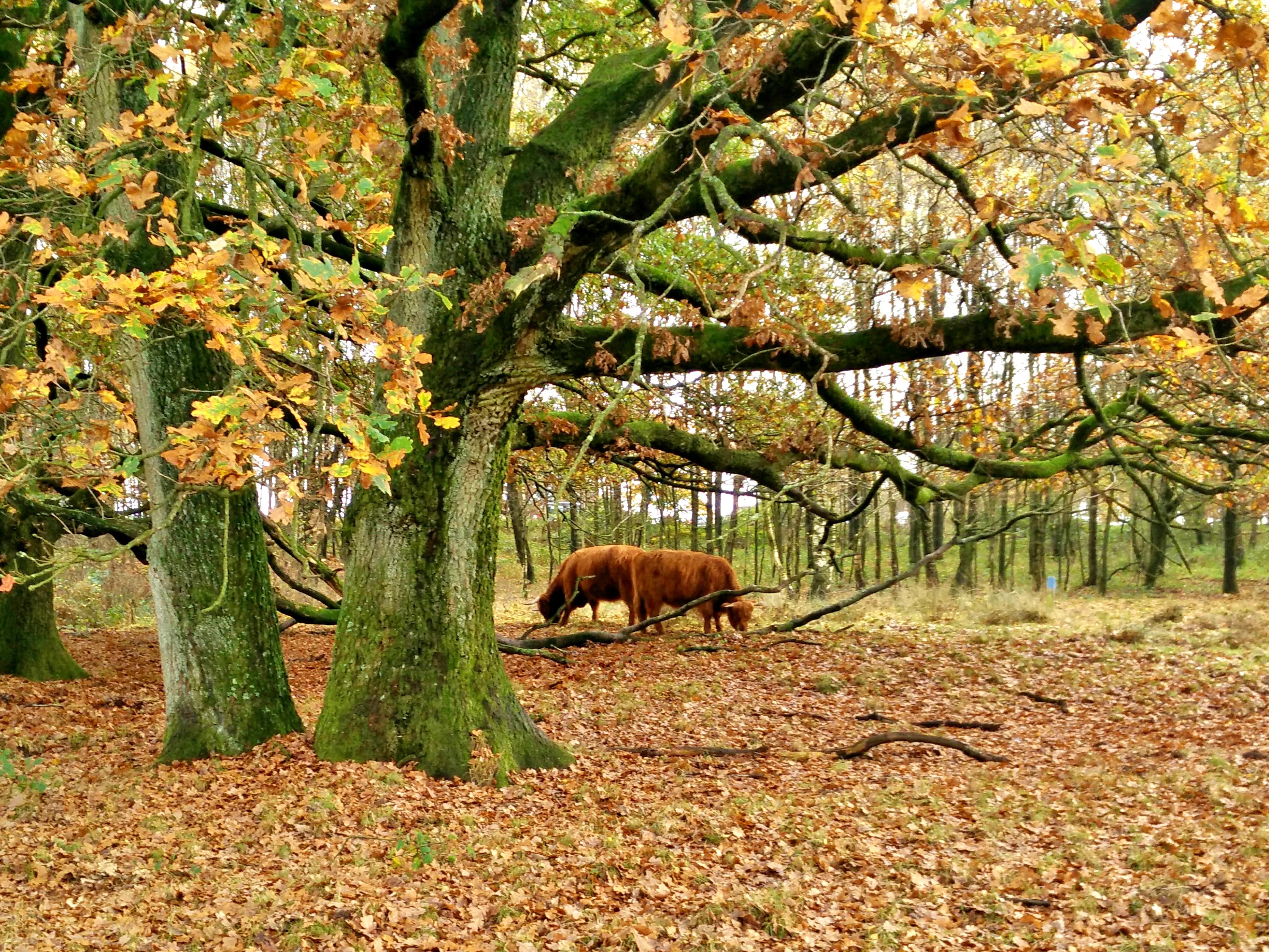 Propuestas Redondas Bosques Holandeses En Otono - Cabaas-de-madera-en-arboles