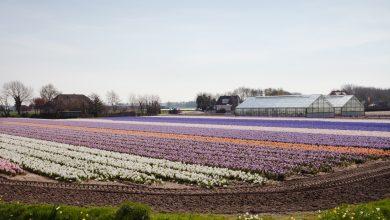 Flores en Noordwijkerhout ©Fernández Solla Fotografie