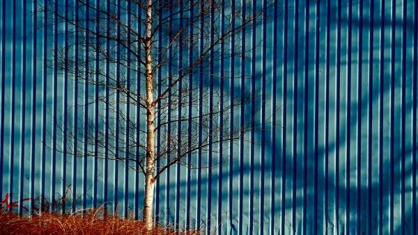Azul en Haarlem
