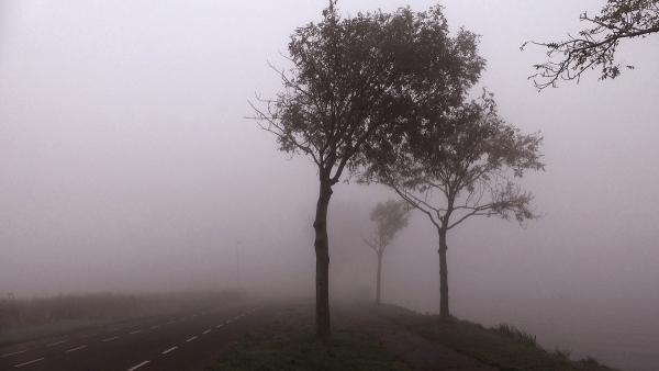 Nieblas